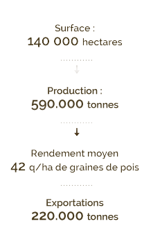 140000 hectares en surface, production de 590000 kilotonnes, 220000 kilotonnes en exportations